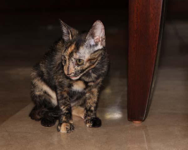 Katten_0005a