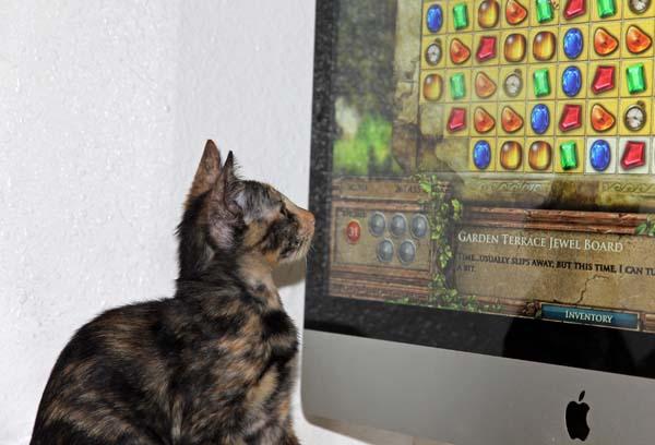Katten_0016a