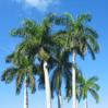 2005_Cuba
