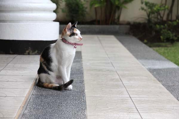 katten_0001a