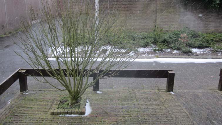 sneeuw_in_rijnsburg_004a